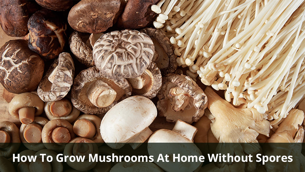 Grow Mushrooms At Home Without Spores