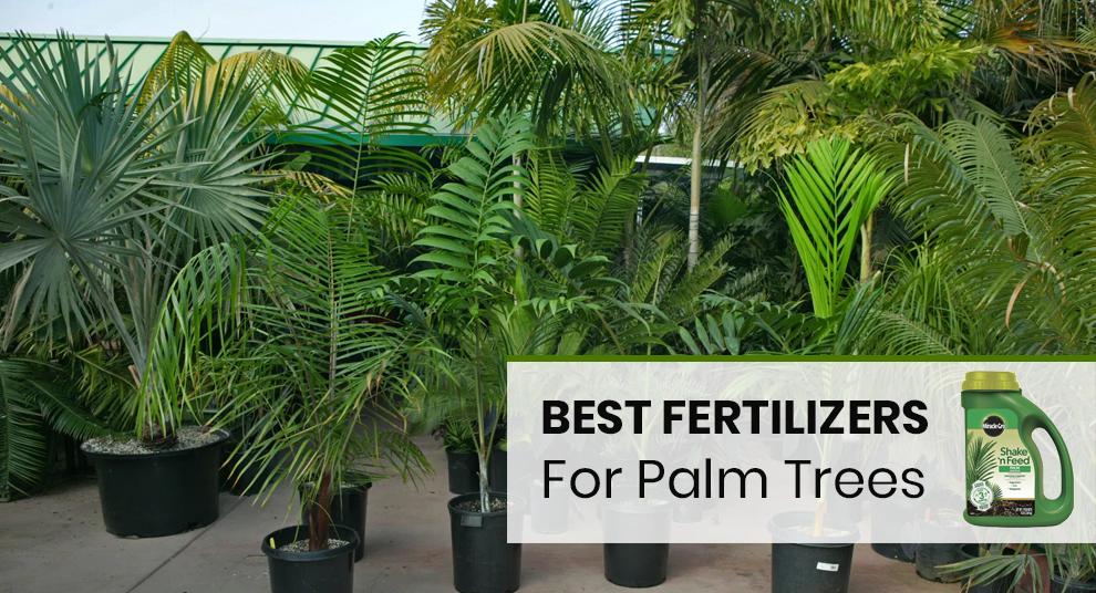 Best Palm Tree Food With Fertilization