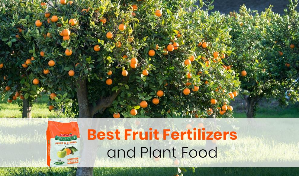 Best Fruit Fertilizers and Plant Food